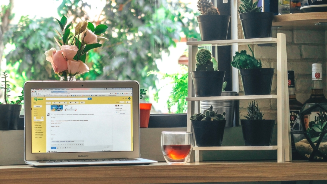Contact, email, cacti, cactus, roses, window, tea, plants, sunshine