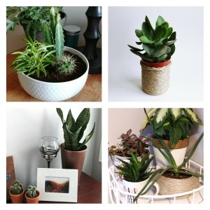 Plants, Plant Posts, Upcycled Pots, Repurposed Pots, Authentically Amy, Projects