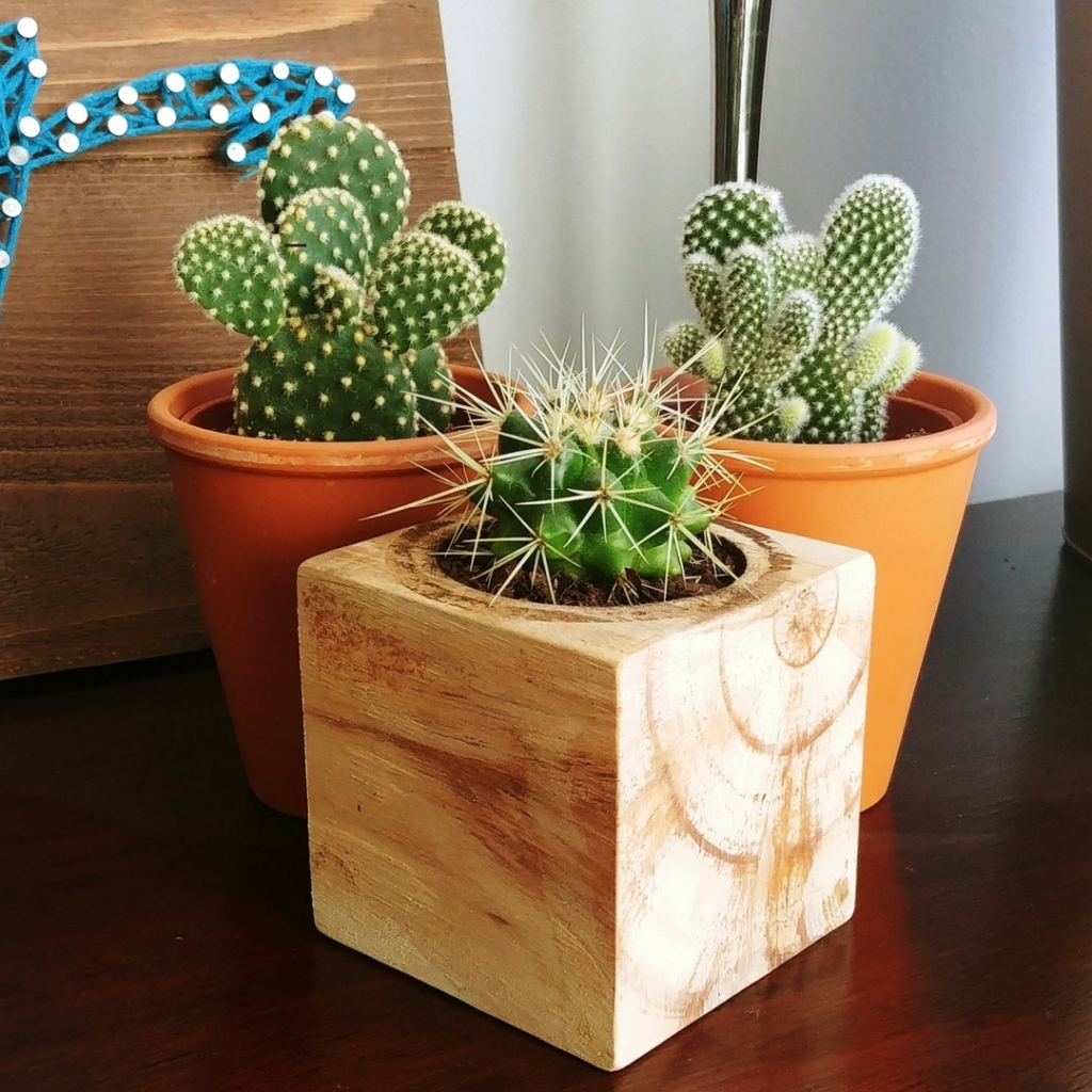 Cactus, Cacti, ECOCube, Repurposed, Wood, Terracotta