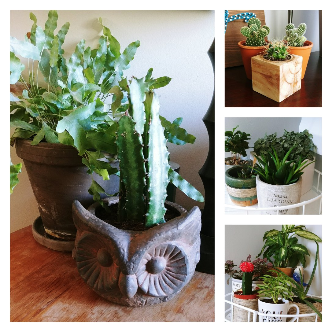 Repotted, Repurposed, Plants, House Plants, Cactus, Succulents,