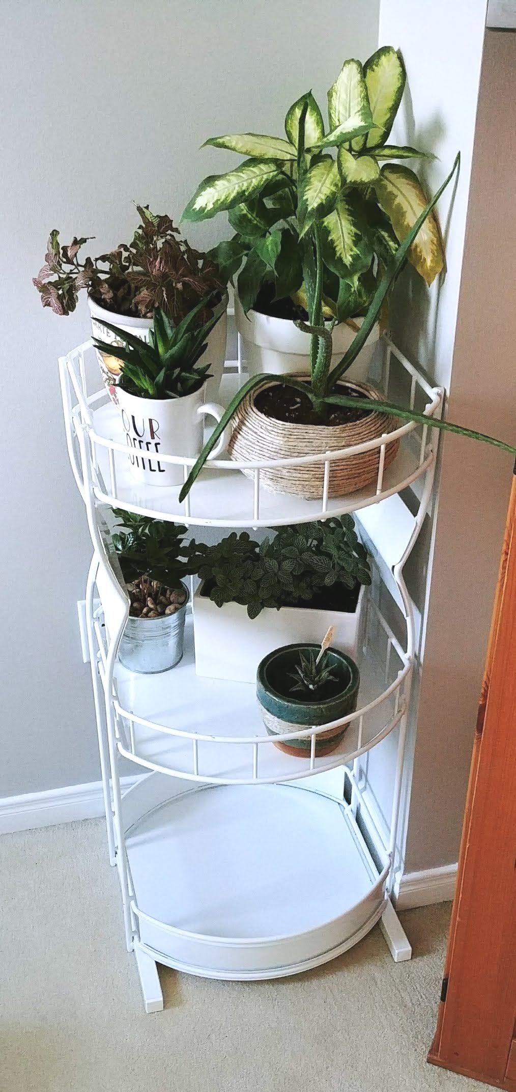 Old Plant Stand